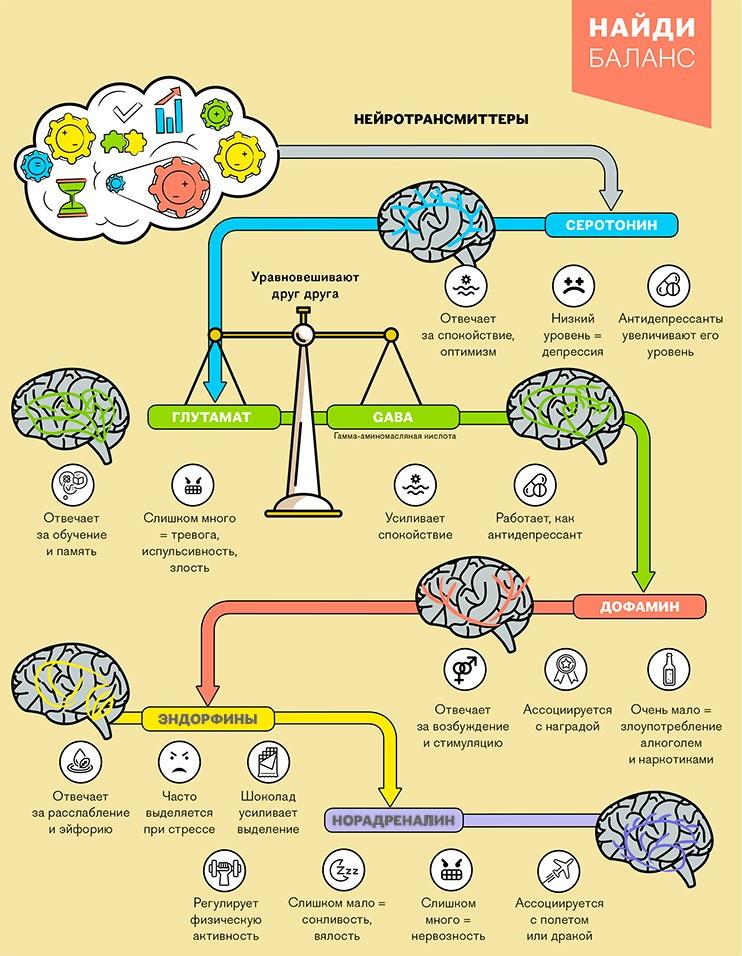 узнай химию своего мозга
