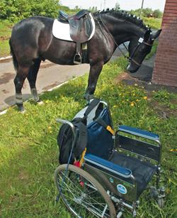 Иппотерапия: целебная сила лошадей (3)