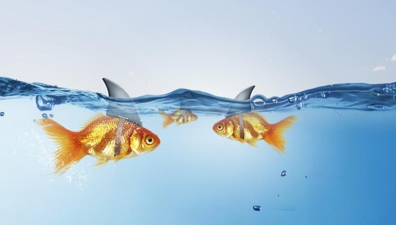 Злость – ресурсное состояние боевые рыбки