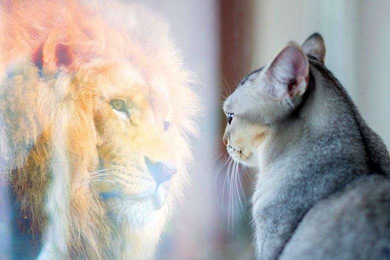 Как перестать переоценивать собственные силы и научиться судить о себе адекватно